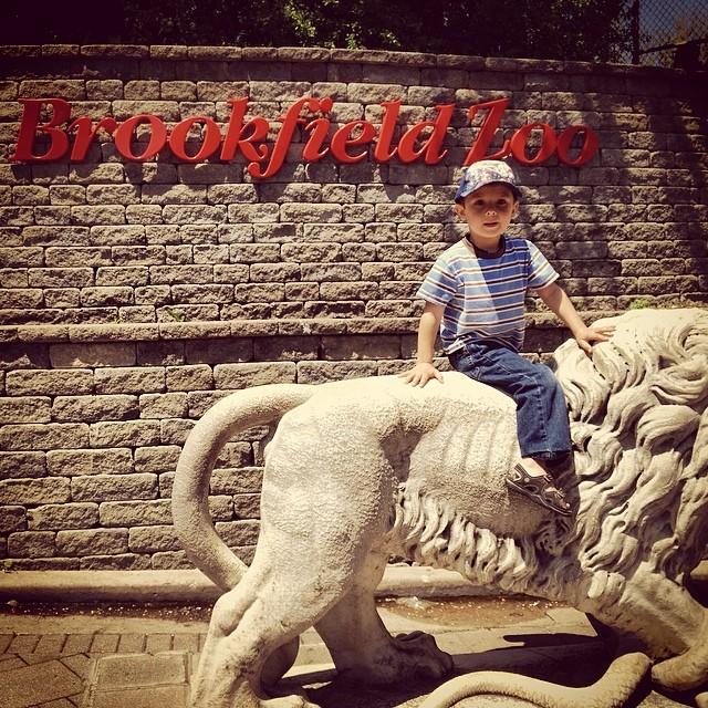 Riding a lion at #brookfieldzoo