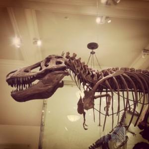 natural history museum nyc dinosaur