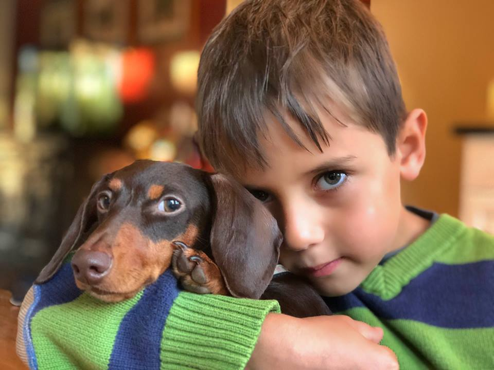 Dachshund rescue meets new human