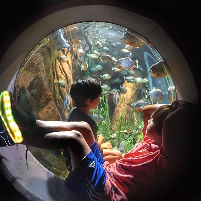 You can take the boy off the island, but he still wants to hang with the fishes! 🐠 🐟 🐙 🌊 The adventures with Gaga at @georgiaaquarium continue! #summerbreak #aquarium #fieldtrip @bachatakim