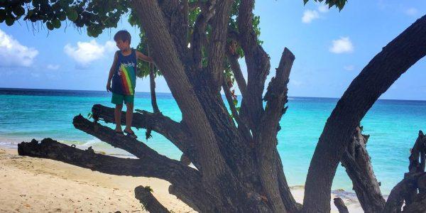 Boy in a tree. #beachboy #childhoodunplugged#islandlife